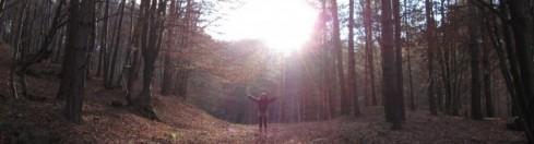 forest sun & fun.jpg