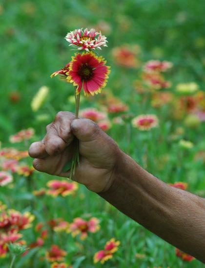 offering flower
